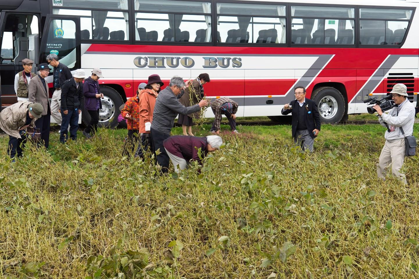 黒千石大豆の収穫体験