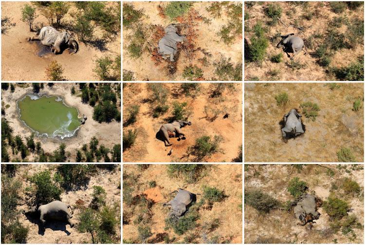 A combination photo shows dead elephants in the Okavango Delta, Botswana.. Picture: REUTERS/Handout