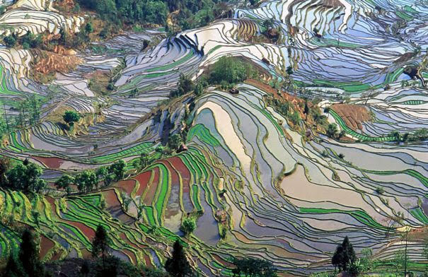 Paisagem Cultural dos Terraços de Arroz de Honghe Hani