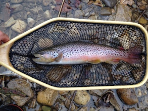 Photo: Gorgeous fall brownie- Mad River