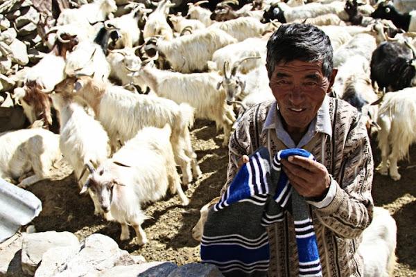 Pastore Himalayano di David Marrone