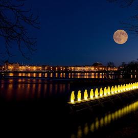 River Blue Hour Mirroring by Jiri Cetkovsky - City,  Street & Park  Night ( mirror, blue hour, penguin, night, prague, river )