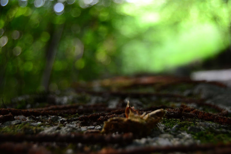 terra e alberi sfumati di aeglos