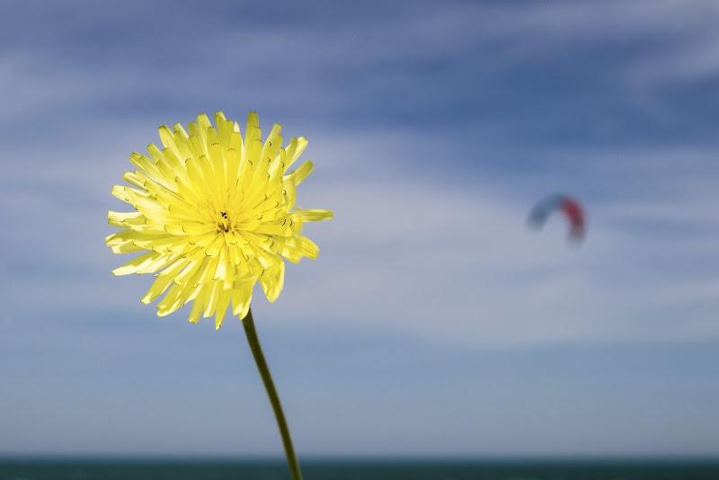 il vento non è invisibile per i fiori e le vele di slyweb