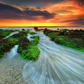Go Green by Agoes Antara - Landscapes Waterscapes