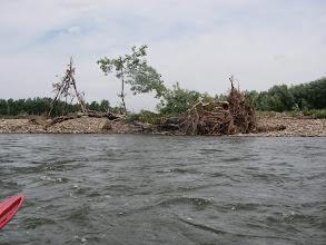 Photo: naniosła Soła drzew...