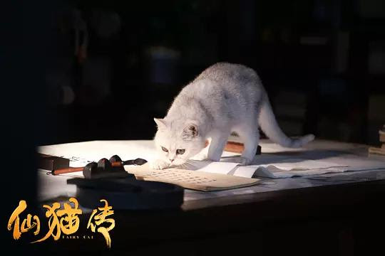 Fairy Cat China Movie