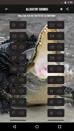 鳄鱼的声音