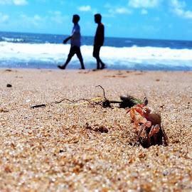 SAND CRAB by Ratnadeep Roy - Animals Sea Creatures ( #seabeach #sand #aquaticcreatures #animals #daylight )