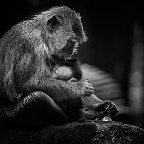 Mom's Love by Sugeng Sutanto - Animals Other Mammals
