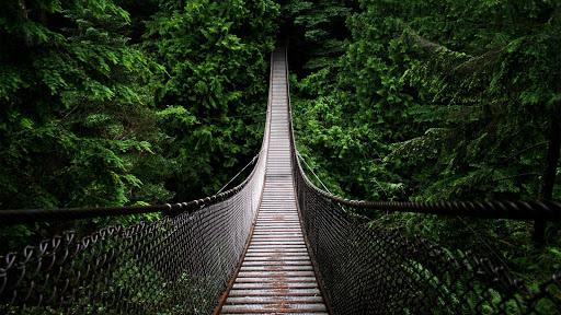 玩免費生活APP|下載森林生活壁纸 app不用錢|硬是要APP
