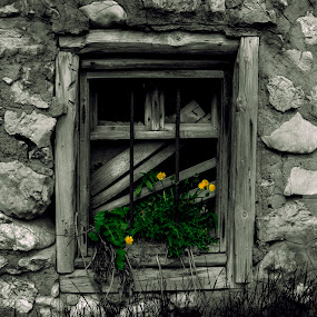 Old  window versus young yellow flowers. by Mănăilă TeoDora - Buildings & Architecture Architectural Detail ( old, window, black and white, yellow, moeciu, flower, brasov )