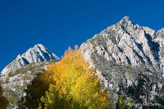 Photo: An Aspen echoes the distant peaks near North Lake, above Bishop, California.  #MountainMonday curated by +Michael Russell