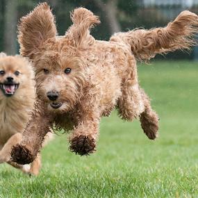 yahoo by Michael  M Sweeney - Animals - Dogs Running ( joy, puppy, michael m sweeney, run, dog )