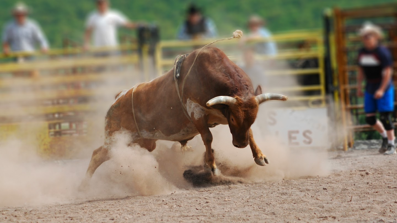 Watch Championship Bull Riding live