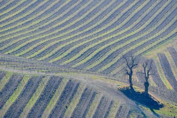 diagonali agricole di s_ornella