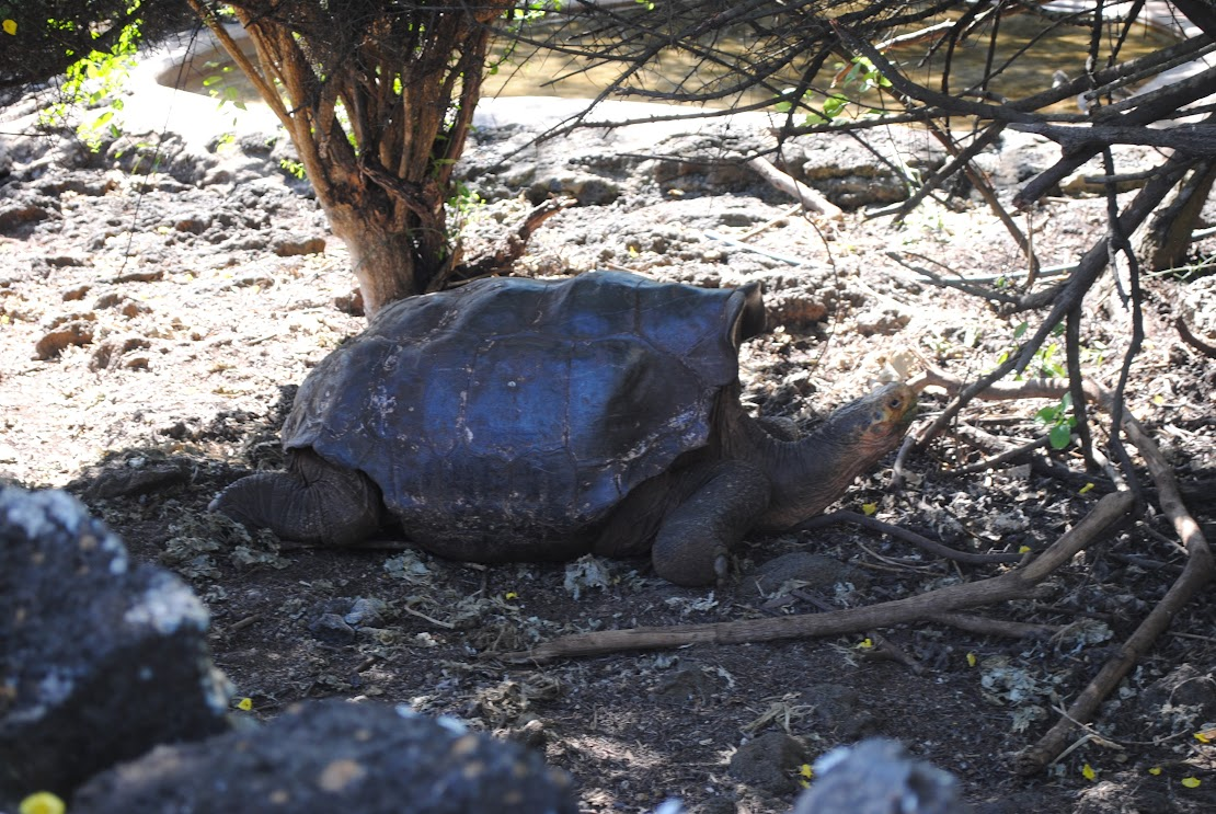 Curious Tortoises