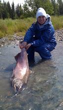 Photo: This 48 pound King Salmon was caught with salmon roe on the Kasilof River.