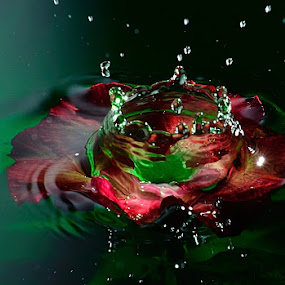 drop onto flower by Ananta White Wings - Artistic Objects Other Objects