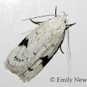 Black-marked Inga Moth