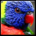 Beatiful Parrots Wallpaper icon