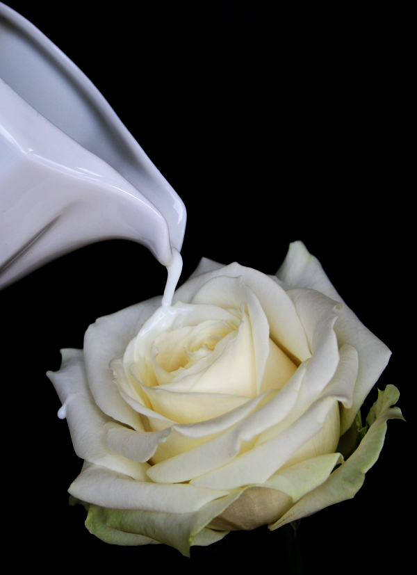 Rosa di Latte di Felicia