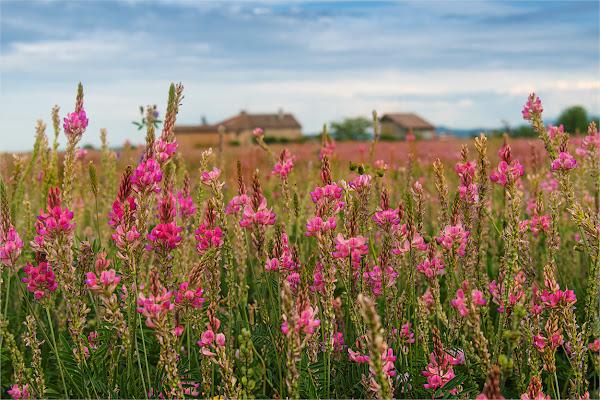 tra i campi in fiore di francescafiorani