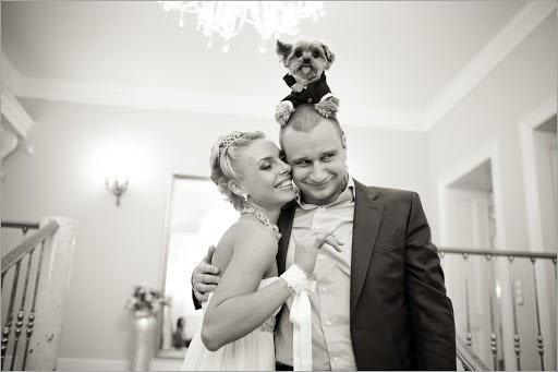 Wedding photographer Sergey Nikitin (medsen). Photo of 24.03.2015