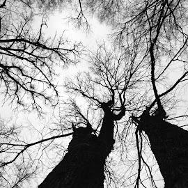 Диалог by Oleg M Kulishov - Black & White Abstract ( b&w, осень, силуэт, деревья, диалог,  )