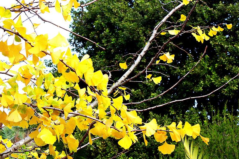 Leaves di giuliavisenzi