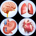 Organs Anatomy Pro. 1.8