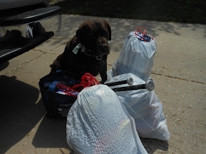 Photo: As I was packing everything up, my Wrigley (named for the Field and not the gum) was happy to lend a helping paw.