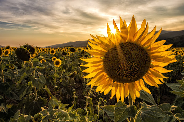 Sole contro sole di Buttero59