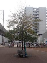 Photo: 学研駅に溶け込むキャサリン