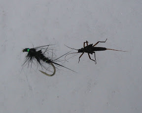 Two Stonefly Nymphs...