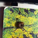 Large Yellow Underwing