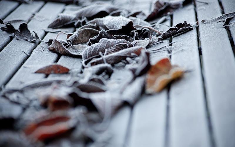 Autunno diventa inverno di Wolly1