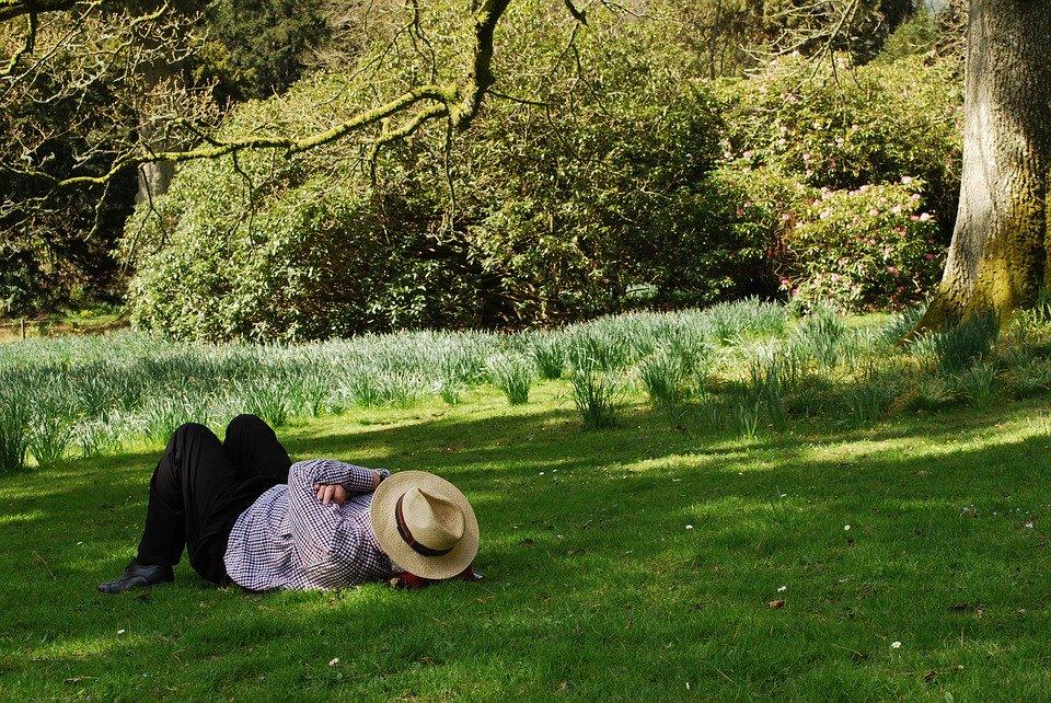 男, のんびり, 夏, 帽子, 水仙, レジャー, 人, 平和, 休憩, リラックス, 日照, 公園, 低温
