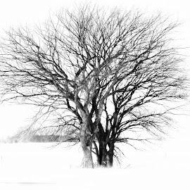 Unity by Kari Green - Nature Up Close Trees & Bushes (  )