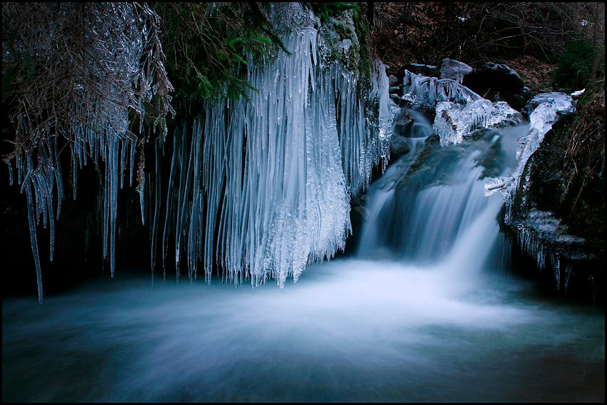 Ice flow by Jan Zajc - Nature Up Close Water ( water, stream, winter, nature, tree, ice, creek, snow, dark, bush, forest, woods )