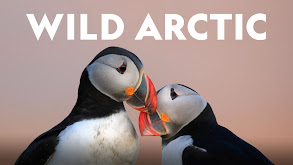 Wild Arctic thumbnail