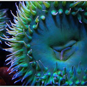 Greener by Noah ONeill - Animals Sea Creatures