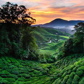 Sunrise at the Cameron Highland II by Pierre Husson - Landscapes Sunsets & Sunrises ( cameron highland, malaysia, sunrise, boh tea, tea plantation )
