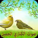 صوت عصافير الكناري بدون انترنت icon