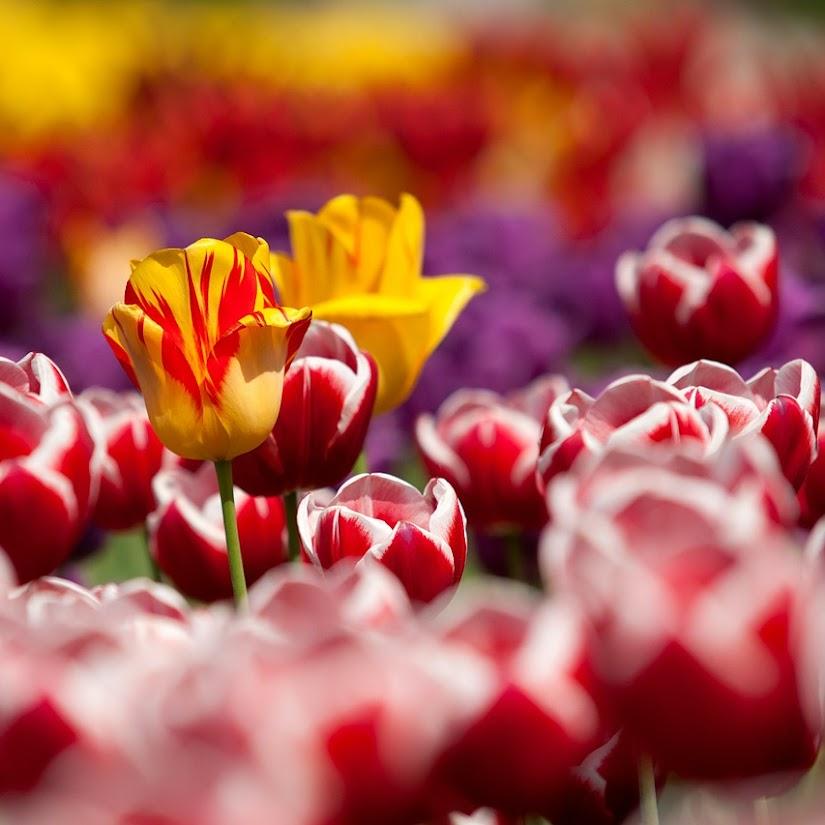 Floristerías online: Como determinar la calidad de las flores