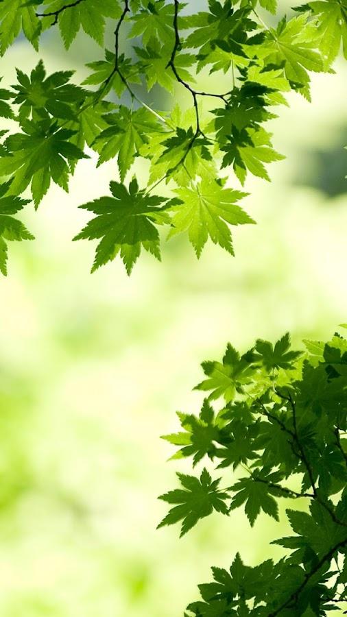 خلفيات اوراق اشجار