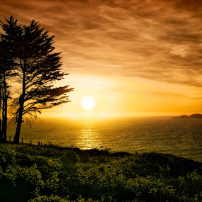 San Francisco Sunset by T.J. Wolsos - Landscapes Waterscapes ( water, sun set, sky, tree, waterscape, california, sunset, pacific ocean, ocean, san francisco )