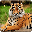 Tiger Wallpapers Offline icon