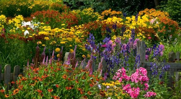 Цветы в сентябре, Цветок сентябрь, Какие цветы в сентябре цветут