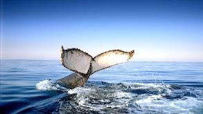 Wild Ocean thumbnail